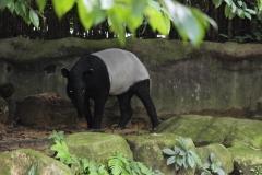 Singapur Zoo 03