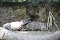 Singapur Zoo 04