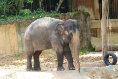 Singapur Zoo 07