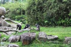 Singapur Zoo 11
