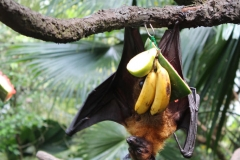 Singapur Zoo 14