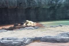 Singapur Zoo 15