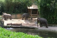 Singapur Zoo 18
