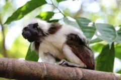 Singapur Zoo Eingang 02