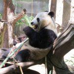 Zoo_008