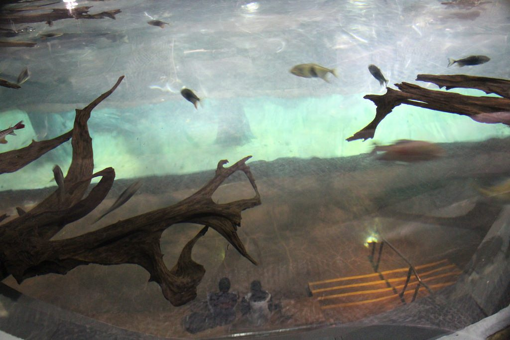 River Safari Aquarium