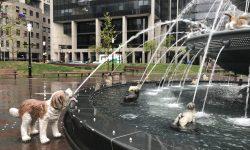 Hundebrunnen in Toronto