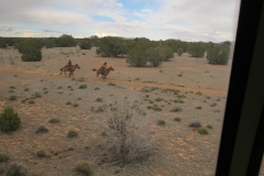 Rückfahrt Grand Canyon - Zugüberfall