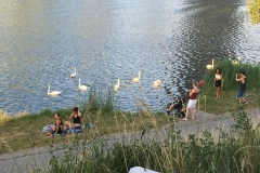 Donauinselfest 2017 - 003