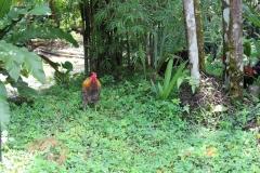 Kuala Lumpur Deer Park 09
