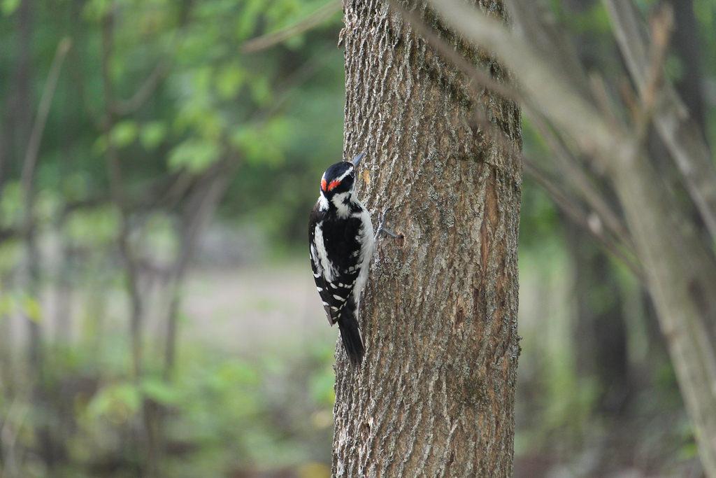 Wesley Clover Parks Campground - der laute Vogel